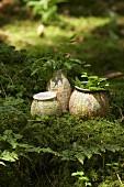 Vasen mit Landkarten beklebt auf Moosboden im Wald