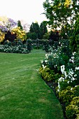 Dense, well-tended lawn in large garden with white roses and shrubs in curved flowerbeds