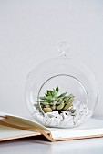 Gravel and plant in decorative, spherical glass terrarium