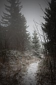 Snowy path through edge of wintry, misty woods