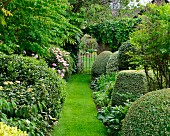 Clipped box bushes and narrow lawn path leading to wrought iron gate in landscaped garden