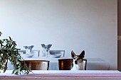 Dog sitting on dining chair at table in front of photo mural of dogs