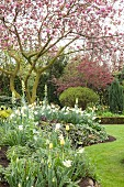 Flowering magnolia and flowerbeds in spring garden