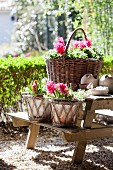 Baskets of pink hyacinths on picnic set
