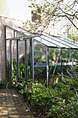 Lean-to greenhouse in dappled shade