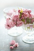 Glass bowl of Japanese cherry blossom