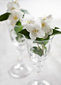 Jasmine flowers in wine glasses