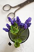 Grape hyacinths in enamel cup