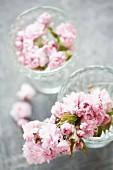 Glass bowls of Japanese cherry blossom