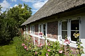 Traditional thatched cottage with flowering hollyhocks in garden