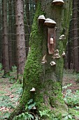 Old roof tile used as candle sconce mounted on tree in woods