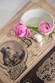 Pale pink ranunculus buds in vintage bowl on top of old illustration in blurred background