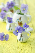Delicate violas in dolls'-house crockery with Peter Rabbit motif