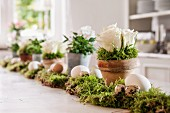 Easter arrangement of eggs and potted plants on bed of moss