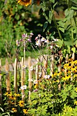 Rudbeckia, Japanese anemones and sunflowers next to wooden fence in cottage garden