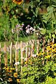 Rudbeckien, Herbstanemonen und Sonnenblume vor Holzzaun in einem Bauerngarten