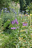 Blazing star and blue globe thistles in summer garden