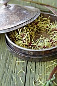Witch hazel flowers in silver dish