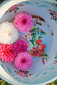 Pink and white dahlia flowers in vintage enamel bowl