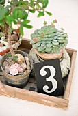 Potted succulents and numbered sign on vintage wooden tray