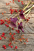 Rose hips and calla lilies on wooden table