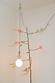 Branch of flowering quince with delicate pink flowers, lit light bulb and vintage-style power cable