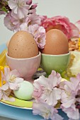 Boiled eggs in pastel eggcups and cherry blossom on plate festively decorated for Easter
