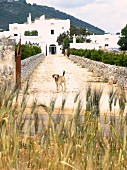 Blick von Strasse auf Hund auf Zufahrt, im Hintergrund mediterrane Anlage in Weiss