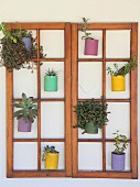 Plants in brightly painted tin cans hung in double lattice window frames