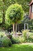 Idyllischer Garten im Sommer mit rund geschnittenen Bäumen