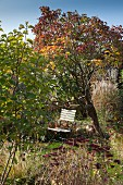 Garden chair under tree in autumnal garden