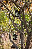 Metalllaternen hängen in einem Baum