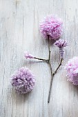 Twig with hand-made pompom flowers in lilac