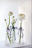 White ranunculus in three vintage-style glass bottles decorated with woollen bows