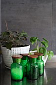 Green spice jars against grey wall