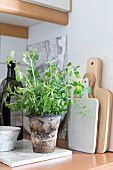 Marjoram in rustic pot on coaster next to chopping boards on kitchen worksurface