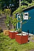 Trees planted in wooden planters in garden
