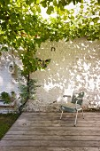 Old chair on terrace under grape vine growing over pergola