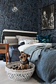 Dog in white basket next to bed with striped headboard and below frame poster of Charlie Chaplin on floral wallpaper
