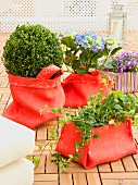 Terrace plants in decorative, hand-sewn red linen sacks