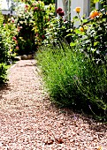 Gekiester Gartenweg zwischen blühenden Rosen und Lavendel