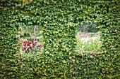 View of flowering beds through openings cut in beech hedge