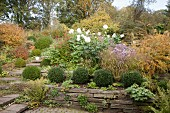 Box balls and drystone wall surrounding herbaceous border in autumnal garden