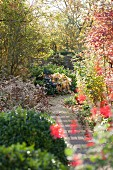 Blue metal chair in autumnal garden with herbaceous borders
