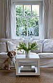 Inquisitive dog sitting in front of white couch next to vase of white tulips on square coffee table