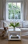 Neugieriger Hund vor weisser Couch, daneben ein quadratischer Couchtisch mit weißem Tulpenstrauss