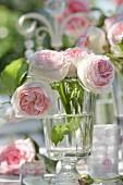 Rosa Rosen in einem Glas