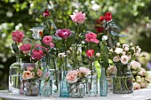 Various roses in collection of different vases