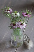 Posy of love-in-a-mist in glass vase and guinea fowl feather on grey-painted wooden table