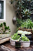 Succulents in planters on vintage wooden base in front of house wall